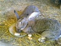 Zajaci i Papagali