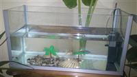 Akvarium ribi komplet