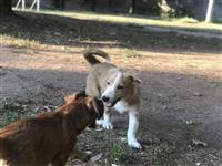Jack Russell Terrier Kucinja