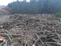 Drva 2 klasa