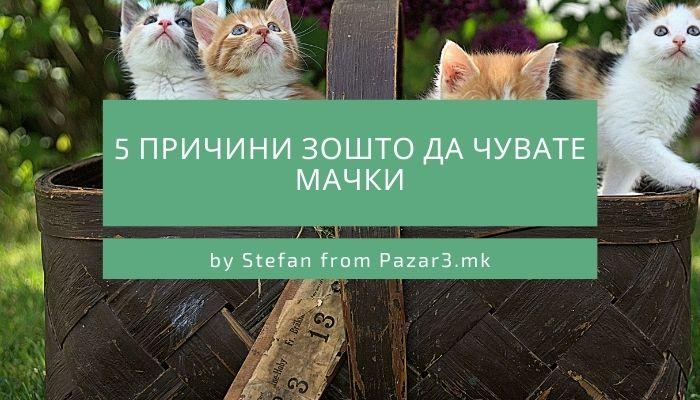 5 Причини зошто да чувате мачки