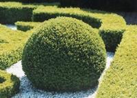 Ureduvanje na dvorovi i zelenilo