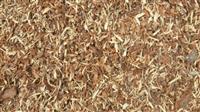 Kora od drvo  Lëkurë nga drunjtë