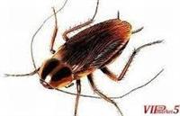 Lek za ponistuvanje na insekti