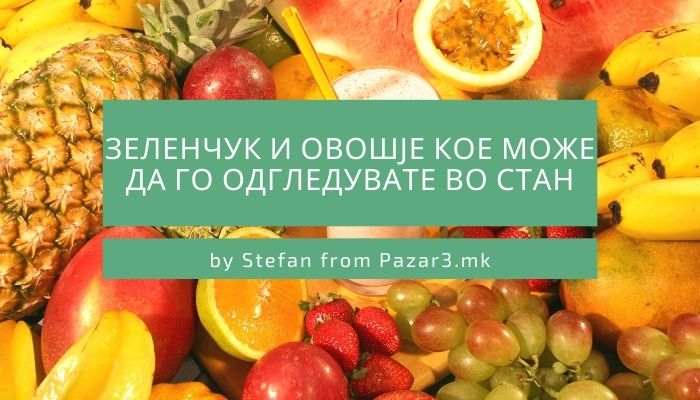 Зеленчук и овошје кое може да го одгледувате во стан