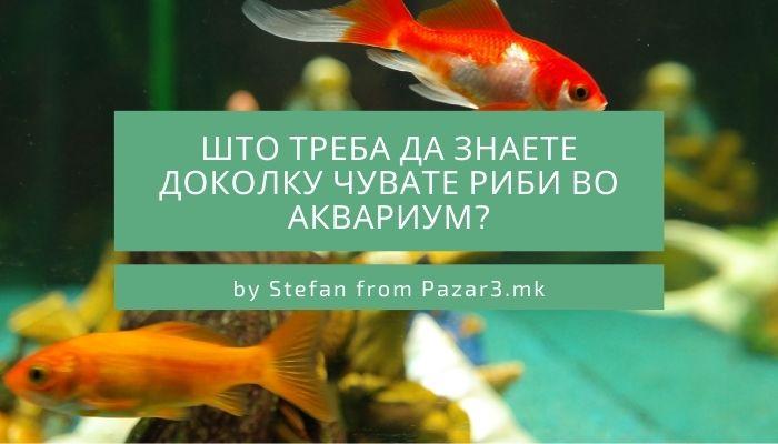Што треба да знаете доколку чувате риби во аквариум?
