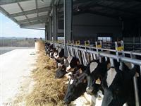 Oprema za farmi izmolzilista za kravi i ovci