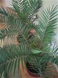 Ponuda na Palmi