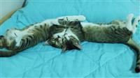 Se podaruvaat dve macinja