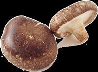 Kerpudha