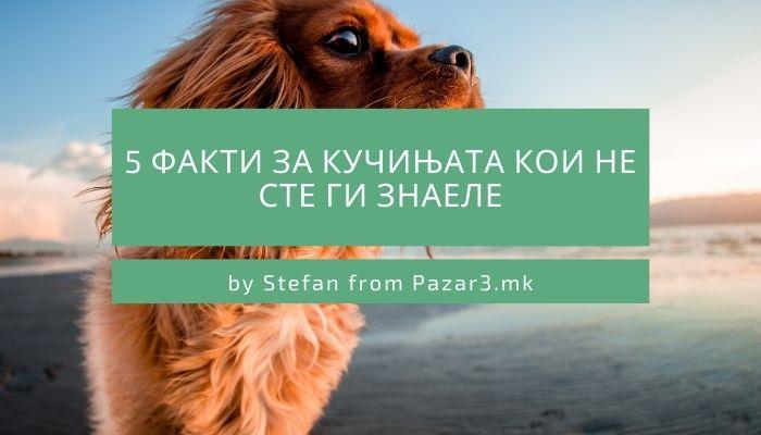 5 факти за кучињата кои не сте ги знаеле