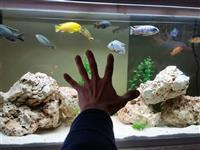 Akvarium i ribi