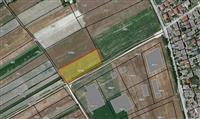 Niva vo industriska zona Marino Ilinden
