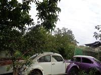 VW Buggy -70