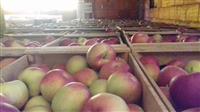 Jabolka prva klasa