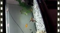 Akvarium so ribi
