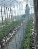 Plant Medika