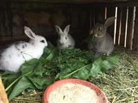 Zajaci