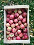 ECOLOGICAL ORGANIC APPLES