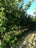 Plac od 3200m2 vo Kavadarci