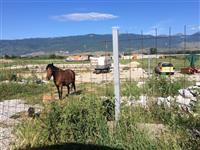 Kal konj