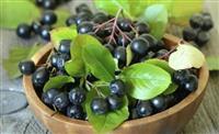 Sveza Aronija i sirupi od sumsko ovosje
