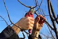 Kroenje na ovosni drvja