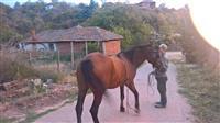 Konj 10 godini star