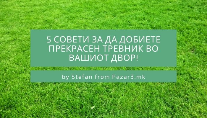 how to make a perfect green lawn in your yard