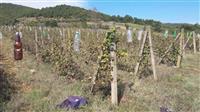 Niva so lozje pogodna za ranc vinarija ili slicno