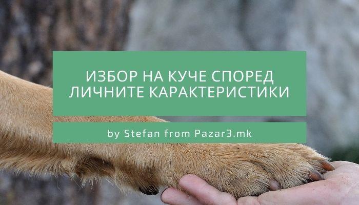 Избор на куче според личните карактеристики